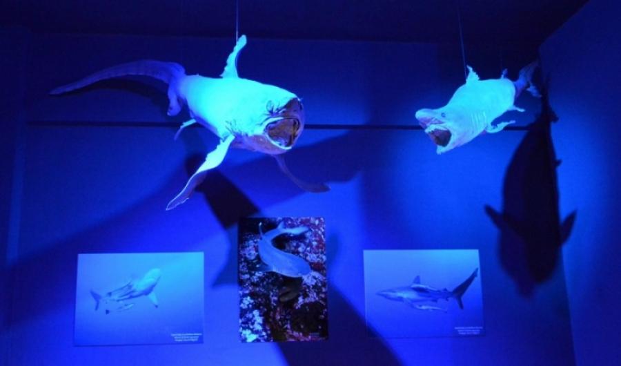 piri-reis-deniz-muzesi