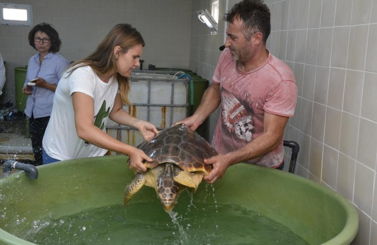 2 Deniz Kaplumbağası DEKUM İle Doğal Yaşamına Geri Döndü